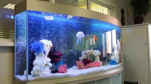 Как правильно перевозить аквариум